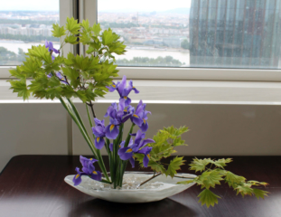 Ikebana-International Vienna im Andromeda-Tower